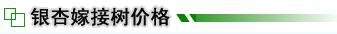 银杏,<a href=http://www.pizhougreen.com/ _fcksavedurl=http://www.pizhougreen.com/ target=_blank title=山东银杏 alt=山东银杏><b>山东银杏</b></a>,银杏树价格